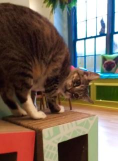Alpha Testing - Cat Yoga